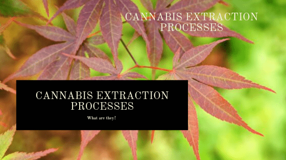 Cannabis Extraction Processes