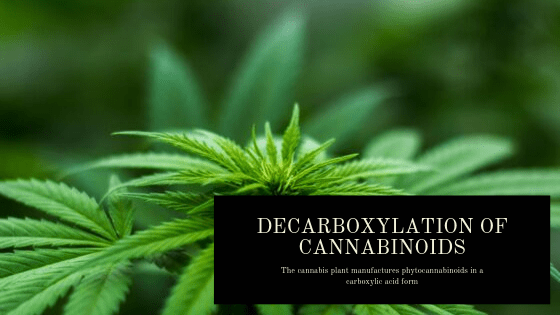 Decarboxylation of cannabinoids