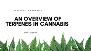 An Overview of Terpenes in cannabis